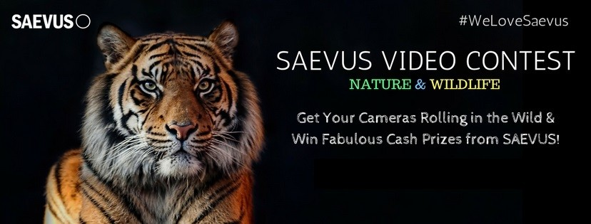 Saevus Video Contest 2917
