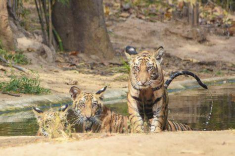 Saevus IMG_20170703_182924_433-475x315 Magazine | Wildlife | Conservation | Photography | Travel | Natural History