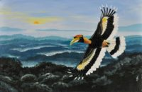 Saevus great-hornbill-200x130 Magazine | Wildlife | Conservation | Photography | Travel | Natural History