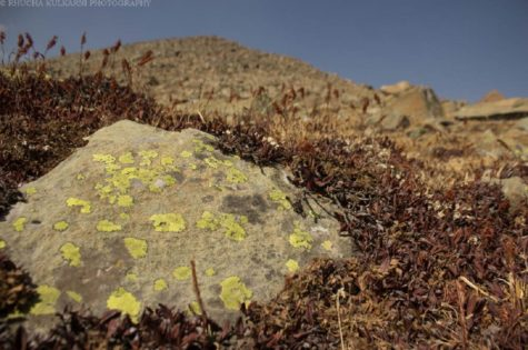 Saevus Lichen-in-Dry-Habitat-1-475x315 Magazine | Wildlife | Conservation | Photography | Travel | Natural History